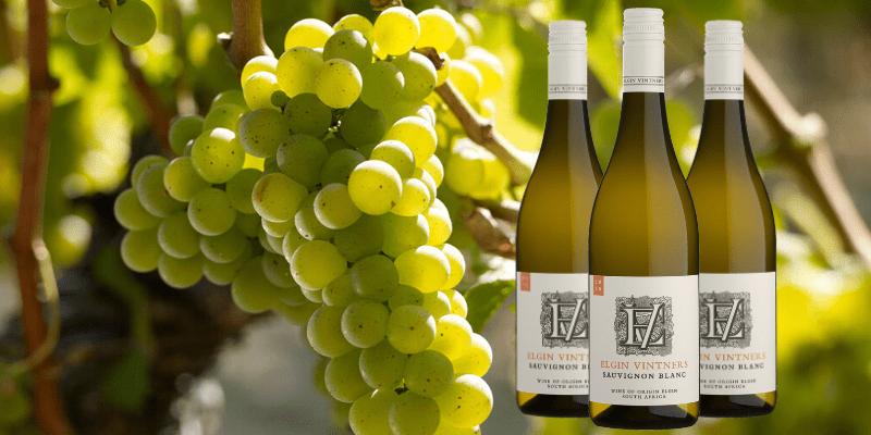 EV Sauvignon Blanc